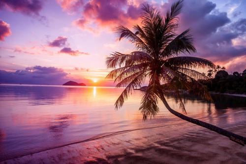 Wandbild Strand, Sonnenuntergang, Palme, Schattierungen von lila, orange und blau