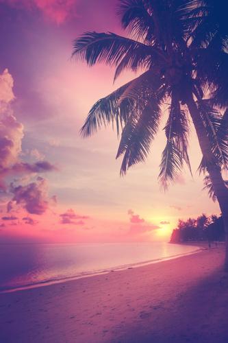 Wandgemälde 3D Sonnenuntergang am Strand, Kokospalme, Meer