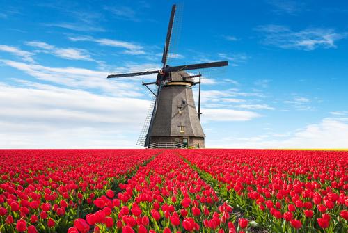 Wandbild Tulpen, Windmühle, 3D Blumen, rote Tapete