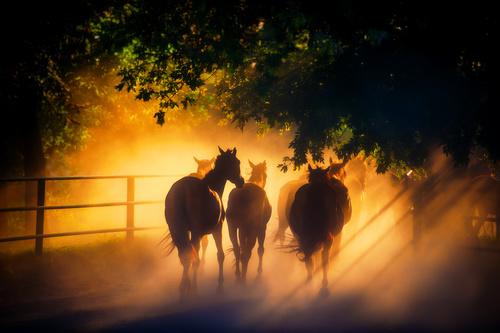 Wandgemälde Pferde, Sonnenstrahlen, Herde, Bäume